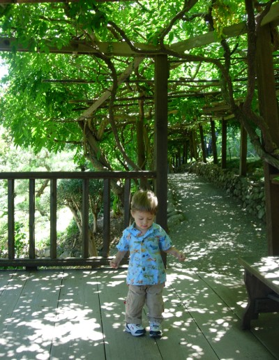 Sammy exploring Hakone Gardens, Saratoga, CA, August 14, 2007; photo by Kimi Mack