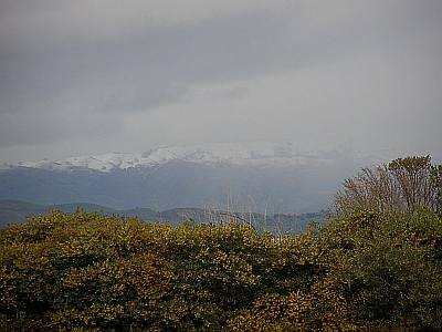 Snow, in California, on the hills east of Milpitas. Photo taken in March 2006 at TiVo HQ by Rich Thomas of Sad Salvation